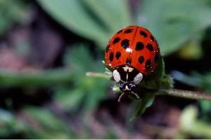 Evil Beetle