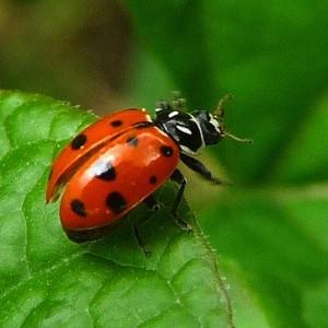 Sweet, innocent Ladybug