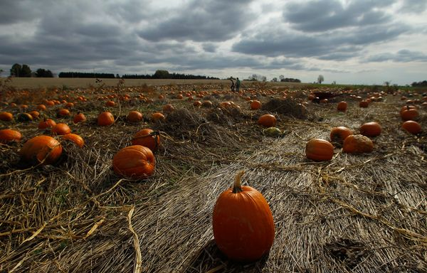 pumpkin-patch_60691_600x450
