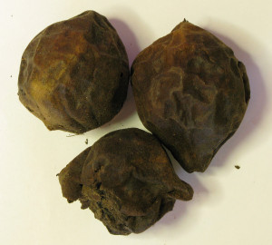 walnut-whole-large